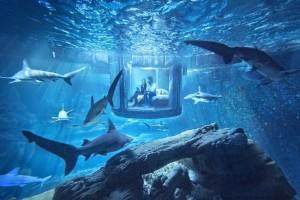 Foto: airbnb.co.uk/night-at/shark-aquarium